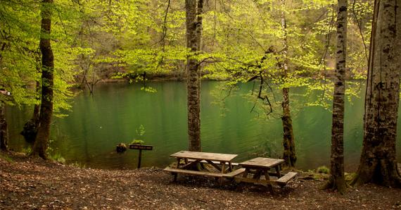 Yedigöller Millî Parkı Günübirlik Turu